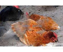 Organska jaja i domaći rezanci