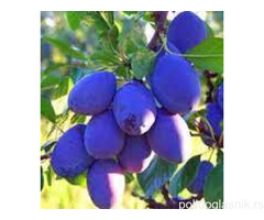 Prolećna akcija vocnih sadnica od proizvodjaca!