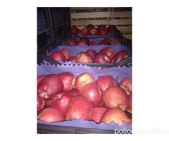 Jabuka na prodaju, vise sorti i vise klasa.